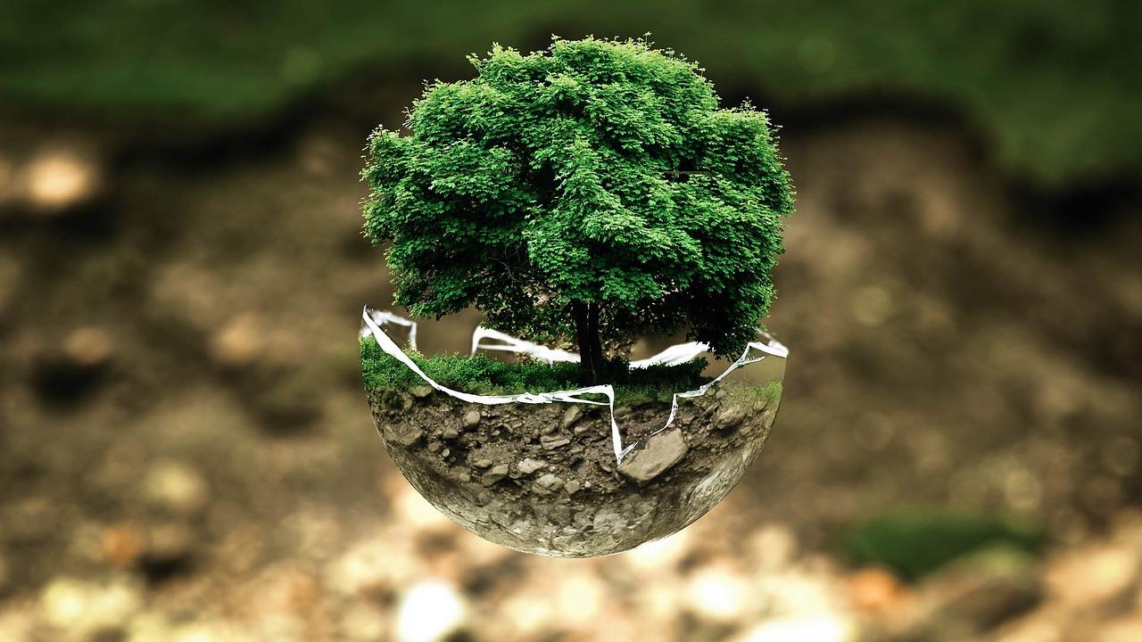 SOBRINSA cumplimos con el medio ambiente